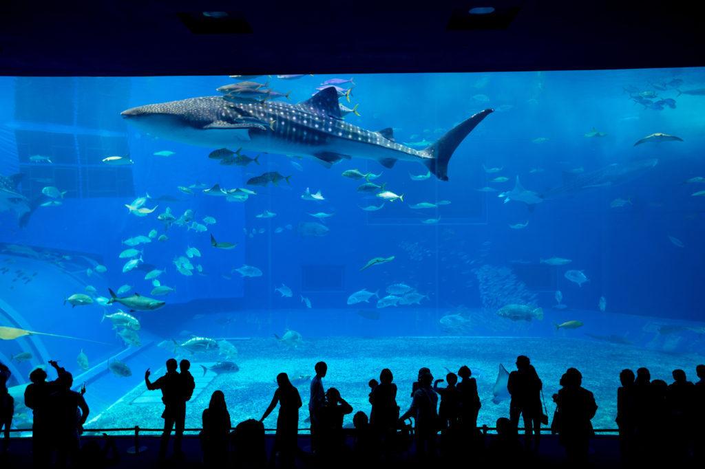 Гигантский океанариум на Окинаве!